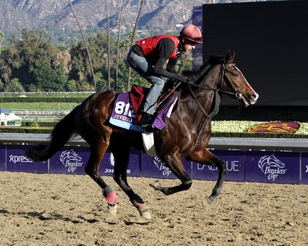 Giovanni Boldini jogs in preparation for the 2013 Breeders' Cup at Santa Anita Park.