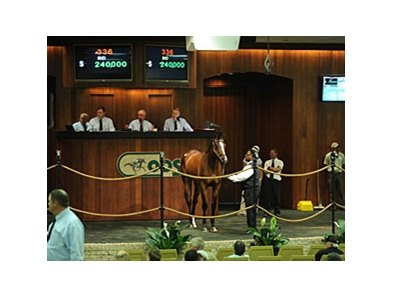 The top-priced filly of the day, Hip No. 336, a daughter of Kitten's Joy, who brought $240,000.