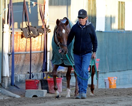 Caption: Starspangled Heat
