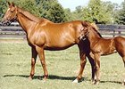 Easter Bunnette with 2011 Horse of the Year Havre de Grace as a foal.