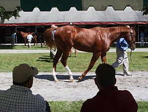 Getting the Yearling Sales 'Cream' to the Top