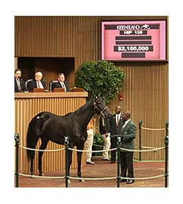 Eblouissante, a half sister to Horse of the Year Zenyatta, sold for $2.1 million on Nov. 5.