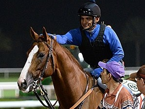 California Chrome - Dubai 2015