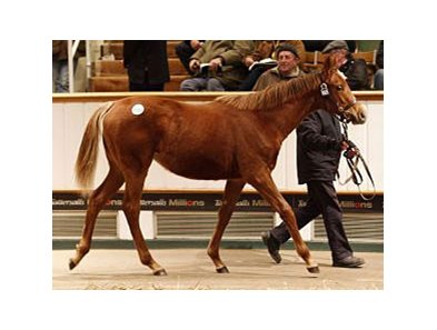 Lot 1055, a Dubawi filly, sold for 450,000 guineas.