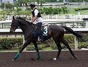 Smoking Sun works at Sha Tin April 21.