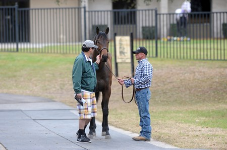 Buyer & Hal Hammock examine Hip 329 who worked 9.4 on Friday in the track show for the OBS sales in Ocala, Florida.