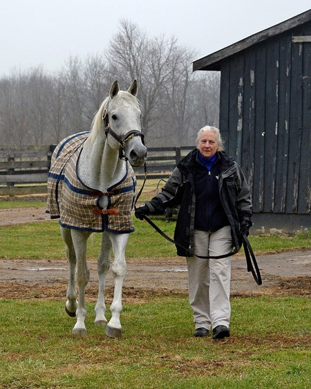 Sandy Hatfield, stallion manager at Three Chimneys, leads Silver Charm out of his barn at Old Friends for a visit with fans and media upon his arrival at the Georgetown, Kentucky retirement home for horses.