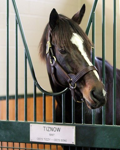 Tiznow ($75,000) looks out from his stall in the new WinStar Stallion Barn on December 20, 2013. Photo By: Chad B. Harmon