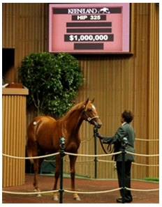 Hip #325, a Tapit colt was purchased for $1 million.
