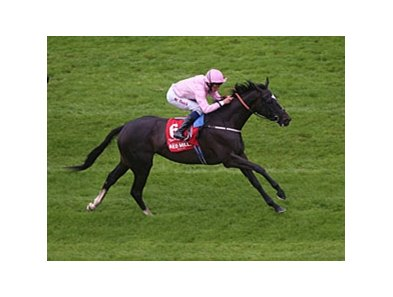The Fugue comes home strong to win the Red Mills Irish Champion Stakes.
