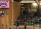 Hip 1005, a yearling colt by Into Mischief, brought $150,000.