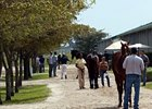 The Fasig-Tipton Florida Sale.