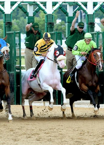 Chief White Fox a rare white thoroughbred broke his maiden at Mountaineer Mountaineer Racecourse in Chester, West Virginia.