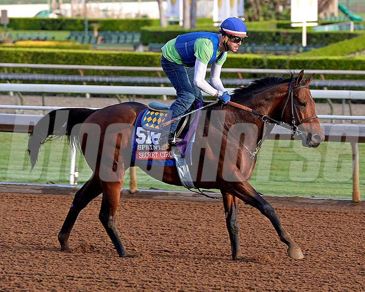 Secret Circle in Sprint for Bob Baffert on Oct. 26, 2014, at Santa Anita in preparation for the Breeders' Cup.