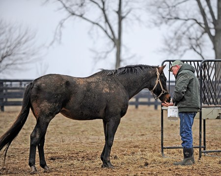 Caption: Blowen feeds Kiri's Clown in his paddock.