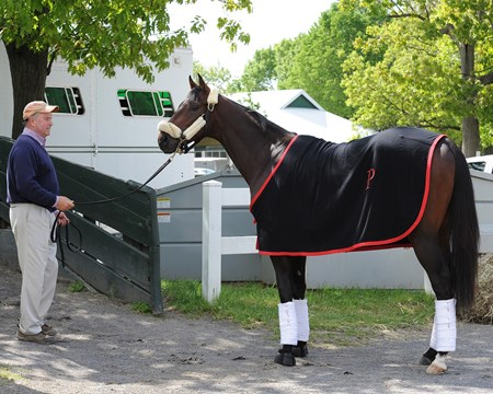 Orb ships from Belmont Park to Pimlico Race Course on May 13 for the 2013 Preakness Stakes.