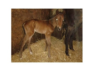 The first foal by Naughty New Yorker, a colt out of Top of the Tree (by Crypto Star).