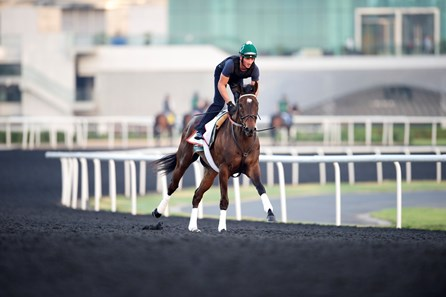 Royal Delta works at Meydan in preparation for the 2013 Dubai World Cup races.