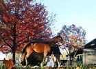 The Keeneland November Sale.