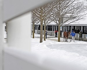 COLDER THAN: Consignors and buyers alike had to contend with snow and ice as the 2010 Keeneland January sale got underway in Lexington.