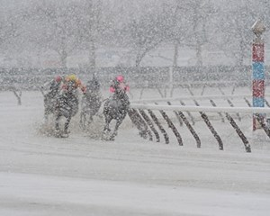 Dashing Through The Snow: The field for the Mommy Dear Stakes at Aqueduct Feb. 25 turns for home in a driving snow. Aqueduct canceled live racing for Fe. 26-27 due to snow.