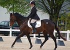 Eldorado's Tune competes in the first Thoroughbred Horse Show.