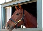 Saratoga to Celebrate Retired Equine Athletes