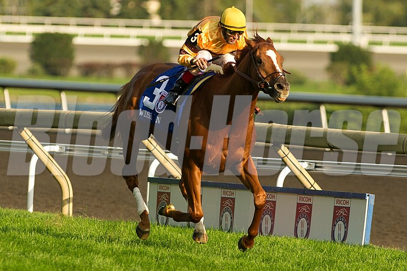 Toronto Ont. September 16 2012. Woodbine Racetrack. Jockey John Velazquez guides Wise Dan to victory in the $1,000,000 dollar Ricoh Woodbine Mile over the E.P. Taylor Turf Course. Wise Dan is owned by Morton Fink and trained by Charles Lopresti.