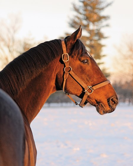 Stallion Keep Up enjoying the morning light at Mill Ridge Farm.