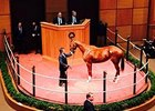 Rose to Gold Gets the Green at Fasig-Tipton