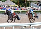 "Itsaknockout (right) finishes second to Upstart in the Fountain of Youth, but is awarded the win.<br><a target=""blank"" href=""http://photos.bloodhorse.com/AtTheRaces-1/At-the-Races-2015/i-5k6H4RJ"">Order This Photo</a>"