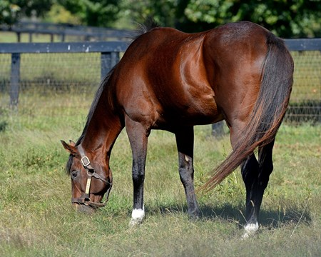 Lure in his paddock at Claiborne Farm near Paris, Ky., on Sept. 23, 2014.