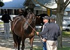 Sales Remain Strong Into Keeneland Session 11