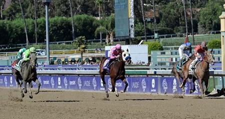 Ria Antonia Horse Profile Bloodhorse
