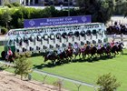 Turf racing at Santa Anita Park