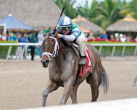 Sweet Whiskey wins the Old Hat Stakes at Gulfstream Park.