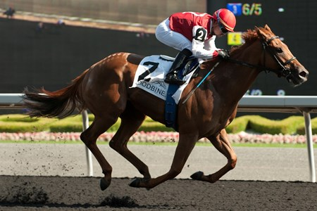 Jockey Justin Stein guides Unspurned to victory in the $250,000 dollar Bison City Stakes at Woodbine Racetrack July 13, 2014. Owner Christine Hayden captures her first lifetime stakes win. Unspurned is trained by Roger Attfield.