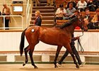 Canford Cliffs Colt Tops Craven Sale Opener