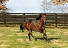 Ghostzapper in his paddock at Adena Springs