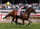 Polanski Gives Jockey Third Victoria Derby