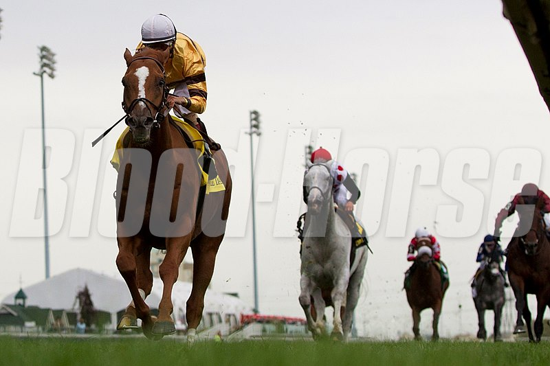 Wise Dan in the Woodbine Mile.
