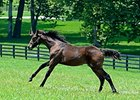 2014 War Front - Zenyatta filly