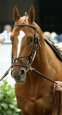 Head shot of 2007 Kentucky Derby contender Curlin.