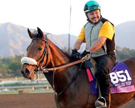Caption:  Nicky's Brown Miss