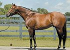 Top Florida Sire Wildcat Heir Euthanized