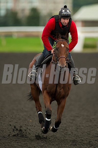 Ricoh Woodbine Mile contender and winner of the Play the King stakes, Dimension, gallops with trainer Conor Murphy in the irons.