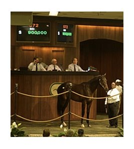 Hip 572, a colt by Bernardini, was purchased for $900,000.