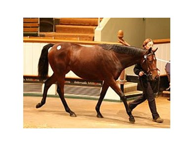 Lot 1230, a Motivator filly sold for 320,000 guineas Oct. 16.