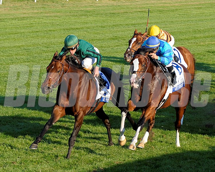 Gio Ponti, with Ramon Dominguez, wins the Shadwell Mile (gr. IT) at