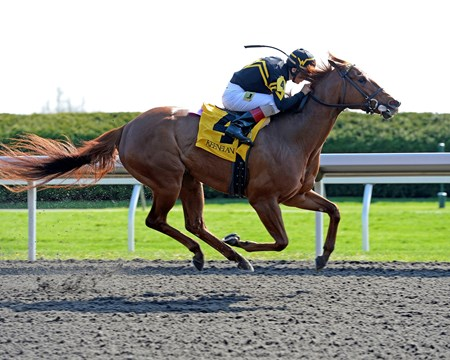 Caption: Judy the Beauty with John Velazquez takes the lead midstretch and goes on to win the Madison (gr. I) by 2 1/2 lengths. 